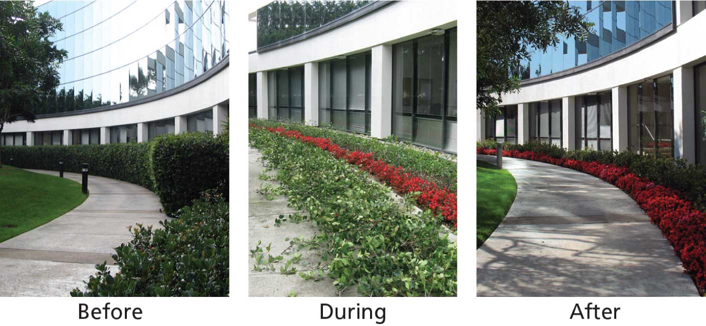 Garden Design Before And After garden design: garden design with willing landscape with eggplant