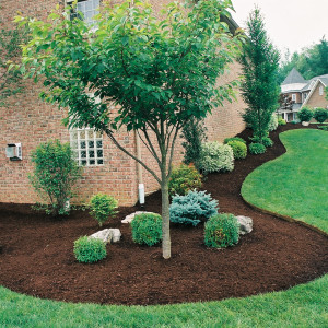 gorgeous-landscaping-august